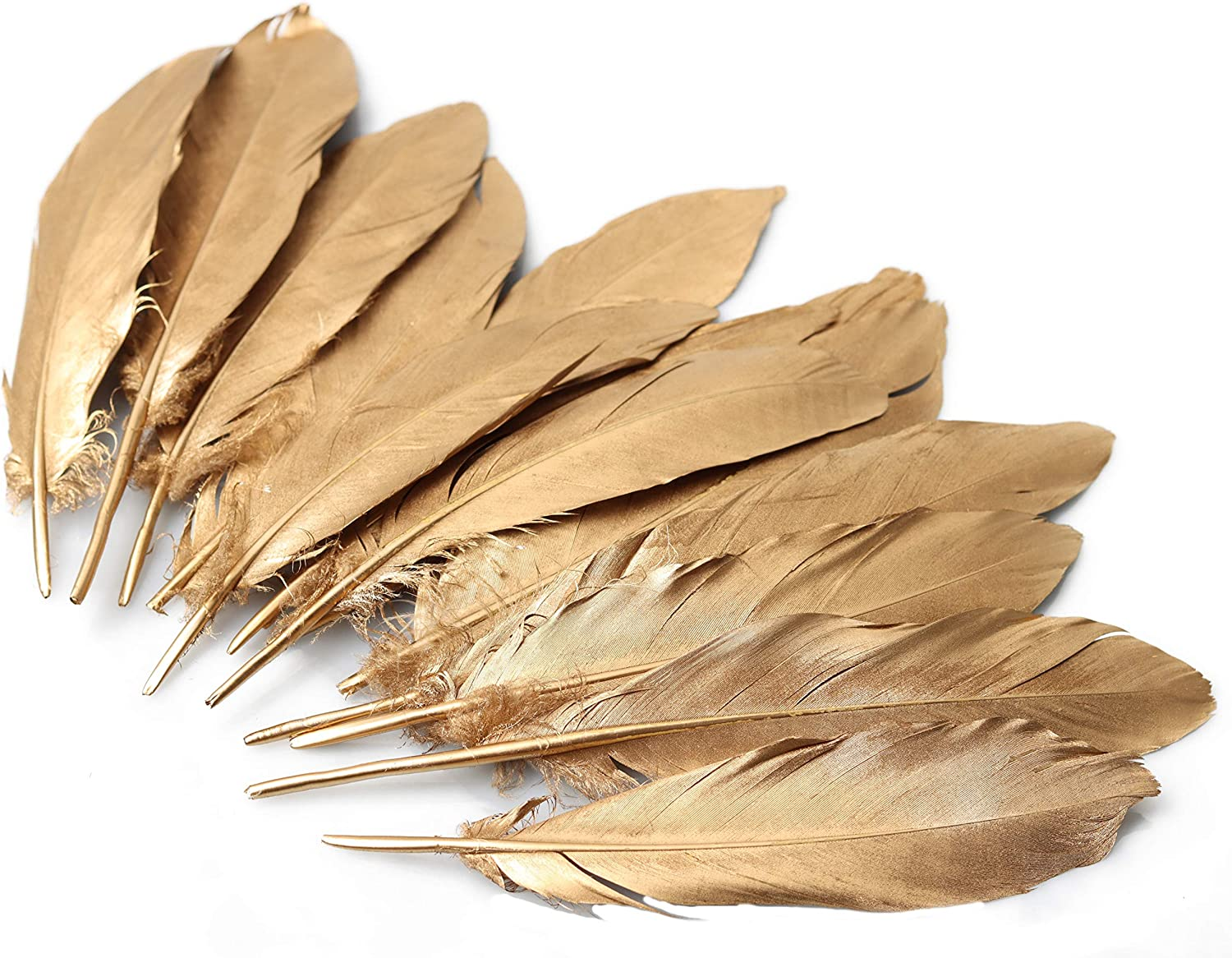 6-8 inches Golden Goose Popular shop is the lowest price challenge Feathers Double-Sided G SEAL limited product Natural Sprayed
