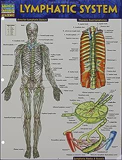 reflexology lymphatic system chart