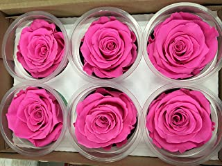 Freeze Dry Rose Head From Ecuador. Pack of 6 (hot pink)
