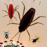 Bug Kill Smash