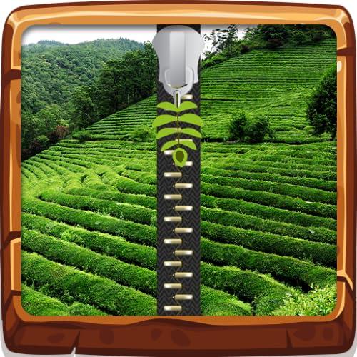 Schermo di chiusura a cerniera del campo del tè