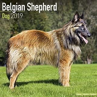 Belgian Shepherd Dog Calendar - Dog Breed Calendars - 2018 - 2019 Wall Calendars - 16 Month by Avonside