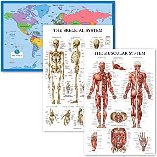 3 Pack - World Map for Kids + Muscular & Skeletal System Anatomical Poster Set - Set of 3 Educational Charts (Laminated, 1...
