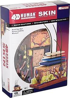 Famemaster 4D-Vision Human Skin Anatomy Model