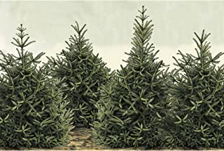 Hester & Cook Fir Trees Check Paper Placemat, 30 Sheets