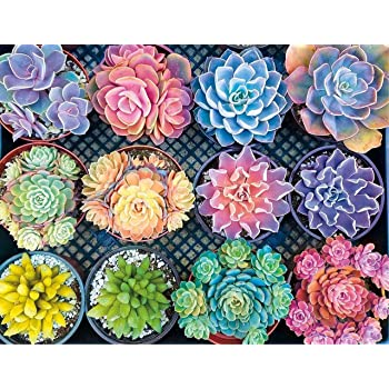 Canvas Size Diamond Painting Kits for Adults Kids Succulent Plants Heart Shaped Full Drill for Home Wall Decor 16x16inch