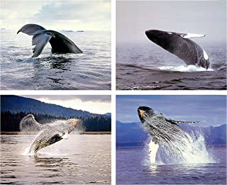 Impact Posters Gallery Ocean Wall Decor Humpback Whale Sea Underwater Animal Picture 16x20 Four Set Art Print Poster