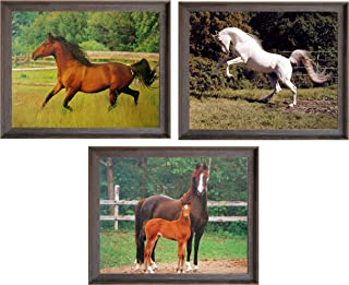 Impact Posters Gallery Arabian Mare Wall Decor Horse Running in The Field and White Horse Rearing Three Set Barnwood Framed Art Print Picture (8x10)