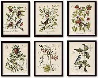 Best charting nature botanical prints Reviews