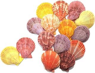 【エデンの貝殻】海の贈り物 虹色 ホタテ (ヒオウギガイ) 各色ランダム組合せ 15枚セット 縦4.1-5.6cm 横3.7-5.1cm[S-01]