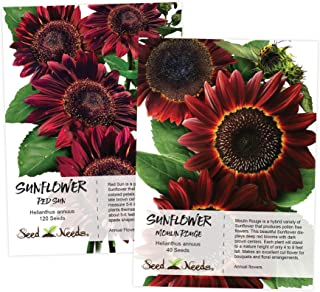 Sunflower Seed Duo, Red Sun & Moulin Rouge (Helianthus annuus) Seeds by Seed Needs