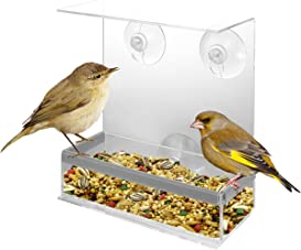 Explore bird feeders for windows