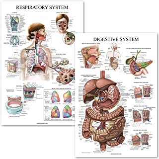 Sponsored Ad - Digestive System & Respiratory System Anatomy Posters - Laminated 2 Chart Set - 18