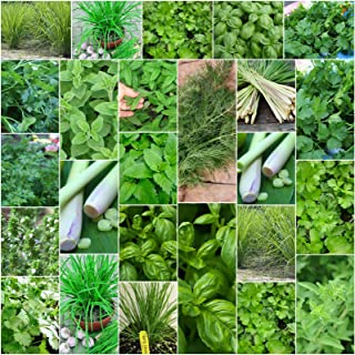Herb Seeds Basil Lemon Grass Coriander Dill Chive Mint Parsley Corriander 7 Packs