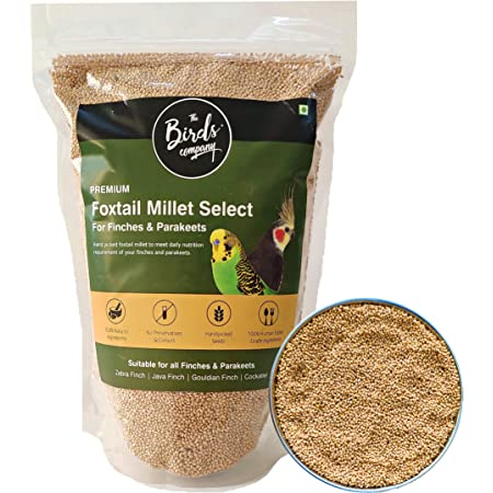 The Birds Company Premium Foxtail Millet (Kangni) Select, Fortified with Spirulina & Cuttlefish Bone, Bird Food for Canaries, Finches, Waxbills, Budgies, Lovebirds, Cockatiels, 450 g