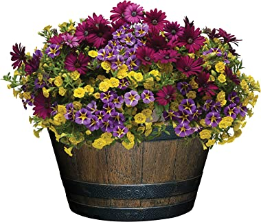 """Classic Home and Garden S1027D-037Rnew Whiskey Barrel Planter, 20.5"""", Kentucky Walnut"""