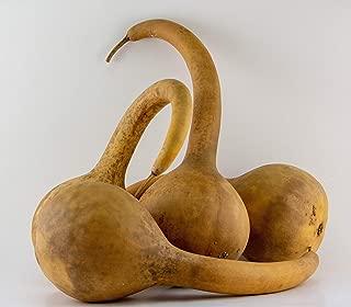 Best dipper gourds crafts Reviews