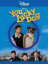 Best you lucky dog Reviews