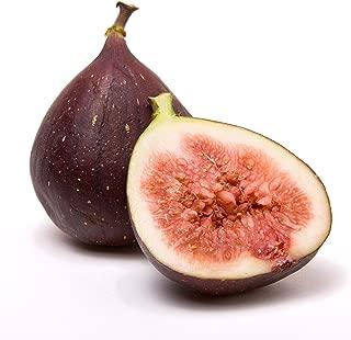 Celeste Fig Ficus Carica Live Plant