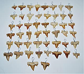 OTODUS Shark Tooth Pendant Necklace LOT of 50 Real Fossils 1/2 to 3/4 inch Size