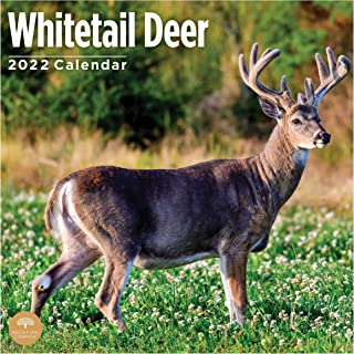 2022 Whitetail Deer Wall Calendar by Bright Day, 12 x 12 Inch, Buck Fawn Hunting