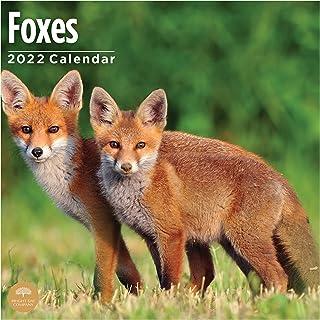 2022 Foxes Wall Calendar by Bright Day, 12 x 12 Inch, Backyard Cute Furry Animal