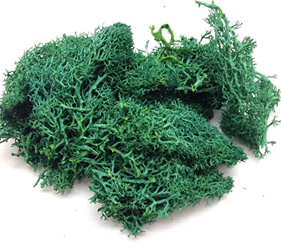 Turquoise PEPPERLONELY 10g Dry Natural Fresh Moss Real Eternal Dried Grass for DIY Decorative Preserved Flowers Accessories