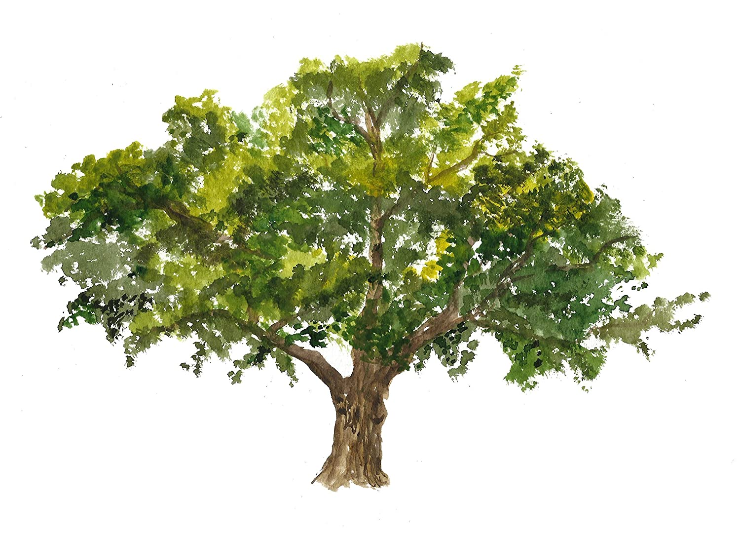 Oak Special price for a limited time tree art Sale special price #A032. print. 8x10 painting.Oak