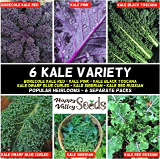 Kale 550 Seeds Heirloom Mix 6 Types 6 Pack Spring Winter Autumn Summer Vegetable
