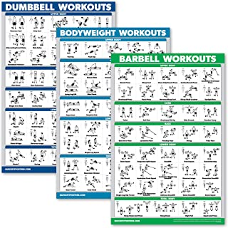 Back Exercises With Barbell And Dumbbells