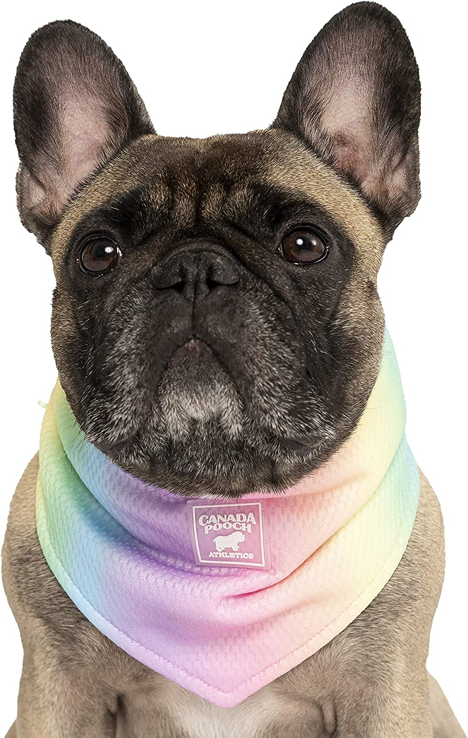 Canada Pooch Cooling Bandana for Dogs Triangle Summer - Scarf S Free shipping on posting reviews Selling and selling
