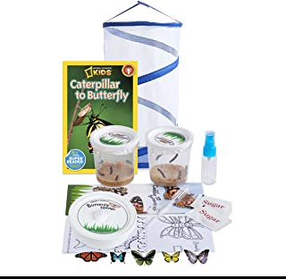 live butterfly caterpillars for sale
