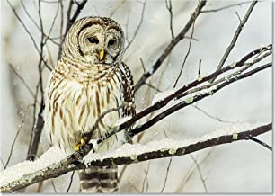 Owl on a Snowy Branch Large Boxed Holiday Cards (Christmas Cards, Greeting Cards)