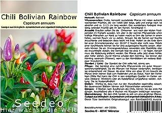 Seedeo Chili Bolivian Rainbow Capsicum annuum 10 Samen