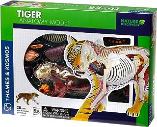 Thames & Kosmos | 261050 | Tiger Anatomi Modellleksak | Rolig 3D-modell | Inspirera barn att lära sig om vår värld och de ...