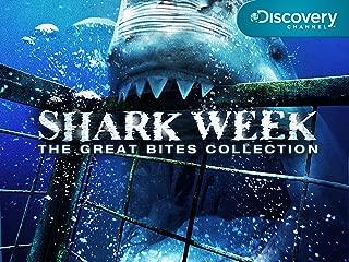 Shark Week Season 2008