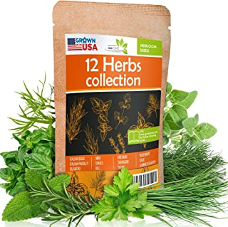 12 Culinary Herb Seeds Pack - Heirloom and Non GMO, Grown in USA - Indoor or Outdoor Garden - Basil, Parsley, Dill, Cilant...