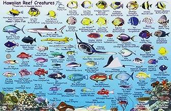 Hawaiian Islands, Reef Creatures Fish ID Card
