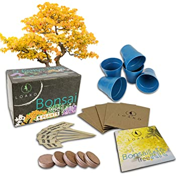 Amazon Com Bonsai Tree Seeds Kit 8 Popular Varieties Of Non Gmo Mini Bonsai Trees Bamboo Plant Markers Wood Gift Box Bonzie Tree Seed Starter Kits Grow Bonzai Indoor Garden