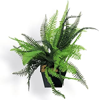 WHW Whole House Worlds Realistic Fern Faux Petite Potted Plant, Realistic Leaves and Stems, Square Black Pot, Approx. 15