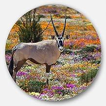 Designart Beautiful Oryx in Flower Field African Metal Artwork- Disc of 11, 11'' H x 11'' W x 1'' D 1P, Green