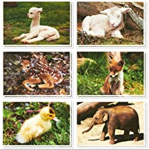 Best blank animal cards Reviews