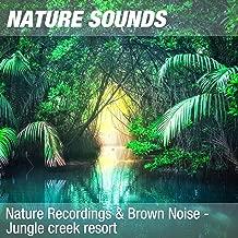 Nature Recordings & Brown Noise - Jungle creek resort