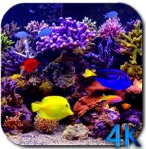 Aquarium 4K video live wallpaper
