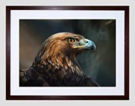 Wee Blue Coo Animal Photo Bird Prey Golden Eagle Head Framed Art Print Poster F12X9940