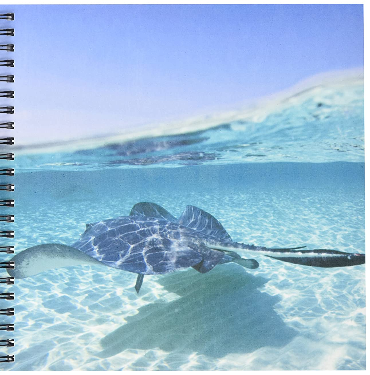 3dRose db_73263_1 Cayman Islands, Southern Stingray in Caribbean Sea-CA42 PSO0047-Paul Souders-Drawing Book, 8 by 8-Inch
