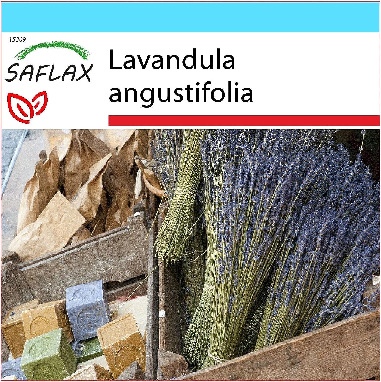 SAFLAX - Set regalo - Lavanda - 150 semillas - Con caja regalo/envío, etiqueta para envío, tarjeta de felicitación y sustrato de cultivo y fertilizante - Lavandula angustifolia