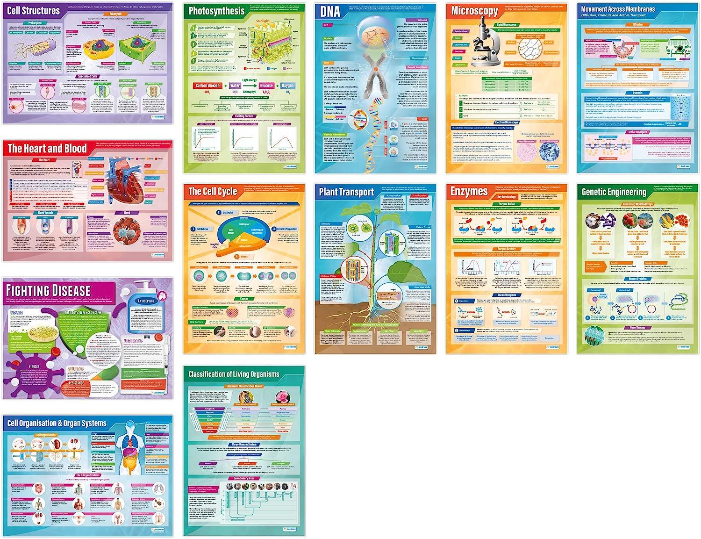Biology Posters - Set de 13   Ciencia Posters   Papel brillante de 850 mm x 594 mm (A1)   Gráficas de Ciencia para el Aula   Gráficas de Educación por ...
