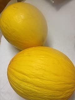 Rare Israeli Golden Honey Melon UNIQUE Shape & Taste Fresh Organic Seed E-Z Grow