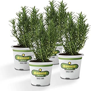 Best harvesting rosemary seeds Reviews